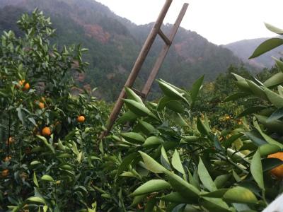 柚子の木の上では20kt(風力5)の風