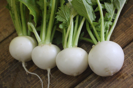 turnip2014Jan