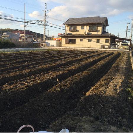 耕耘後の圃場。