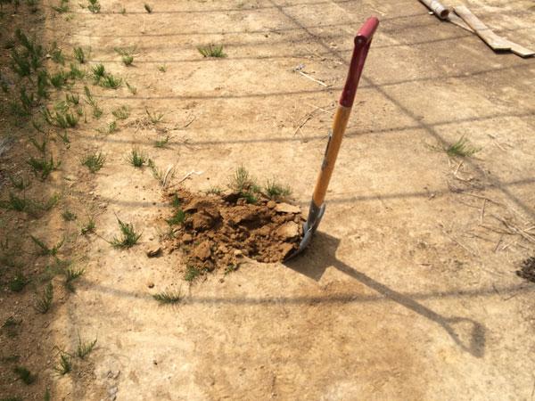 表土から3cmぐらいと採取するのよ。