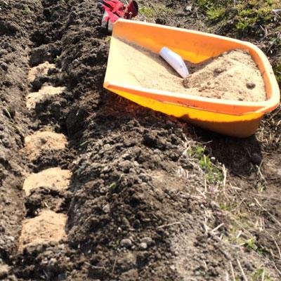 これがハンサム流のジャガイモの植え方